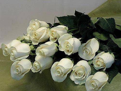 Букет белых роз, цветы, розы,
