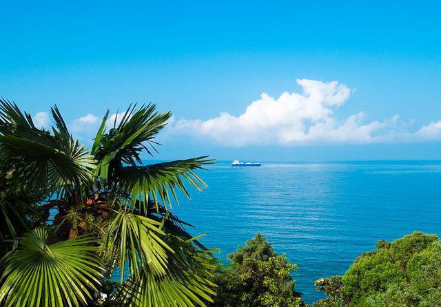 Пальмы, сочи, пальмы, море,