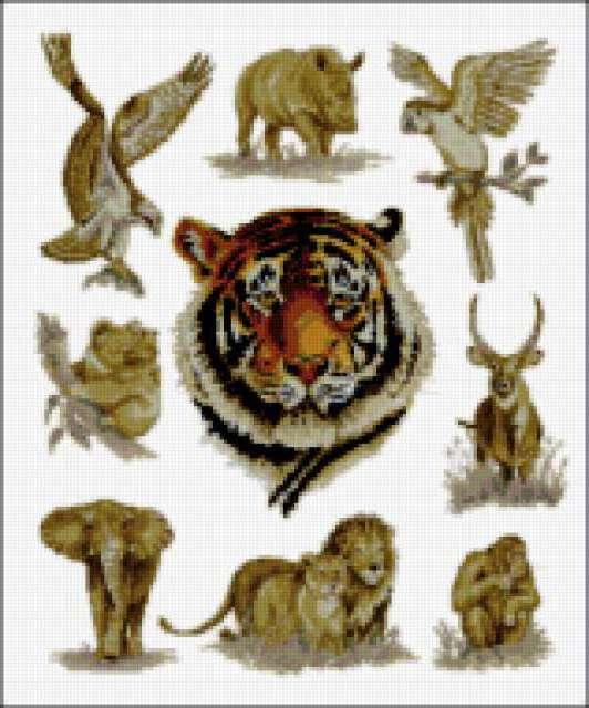африка, тигр, слон, коала