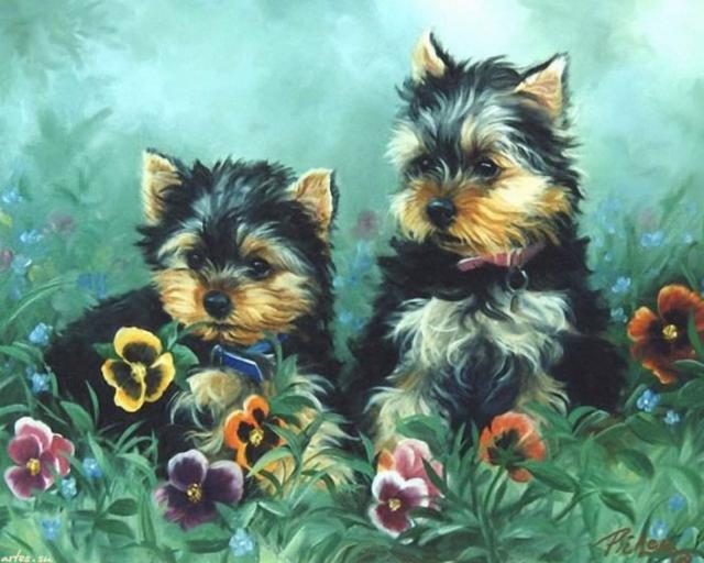 Йорки, собака, животное