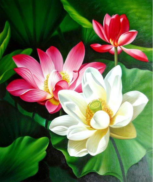 Лотосы, живопись, цветы