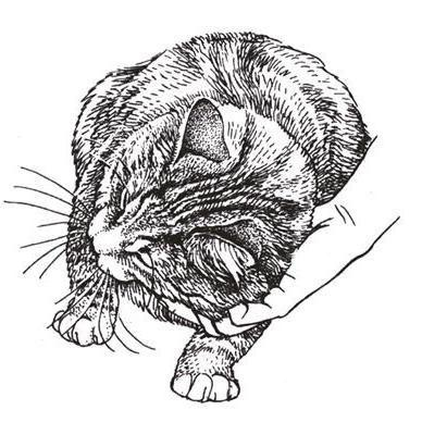 Ч-б кошки, оригинал