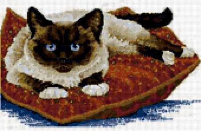 Сиамский кот на подушке,