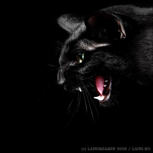 Черная кошка, оригинал