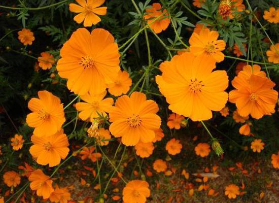 Желтые цветы, цветы