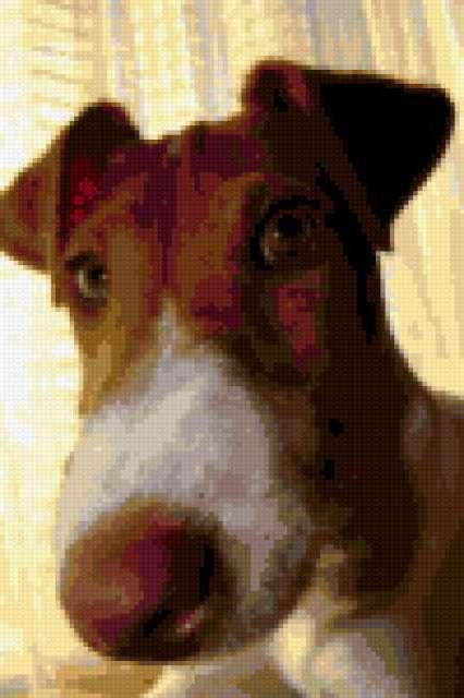 Буран2, собака, фокстерьер