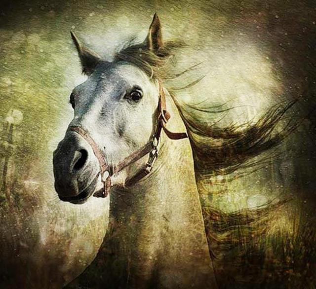 Бег, лошади