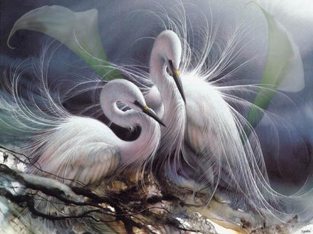 Гармония, пара, журавли, птицы