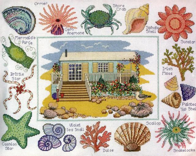 море, ракушка, водоросли,