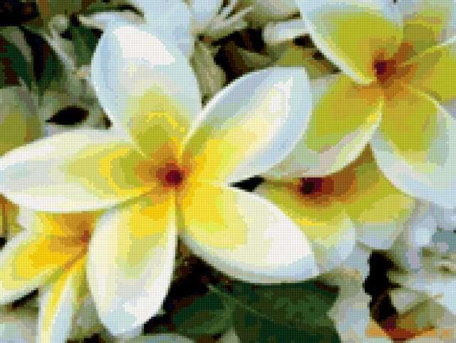 Бело-жёлтые цветы))