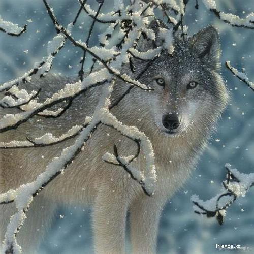 Зима.Волк., волк, зима, снег,