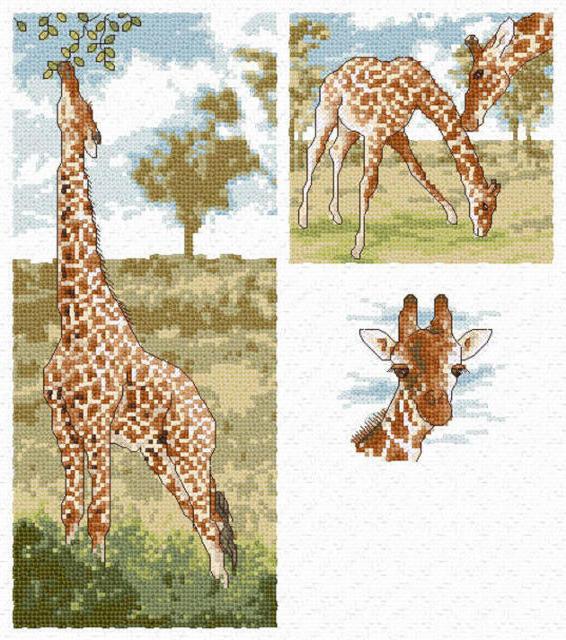 Жирафы, жирафы, жираф
