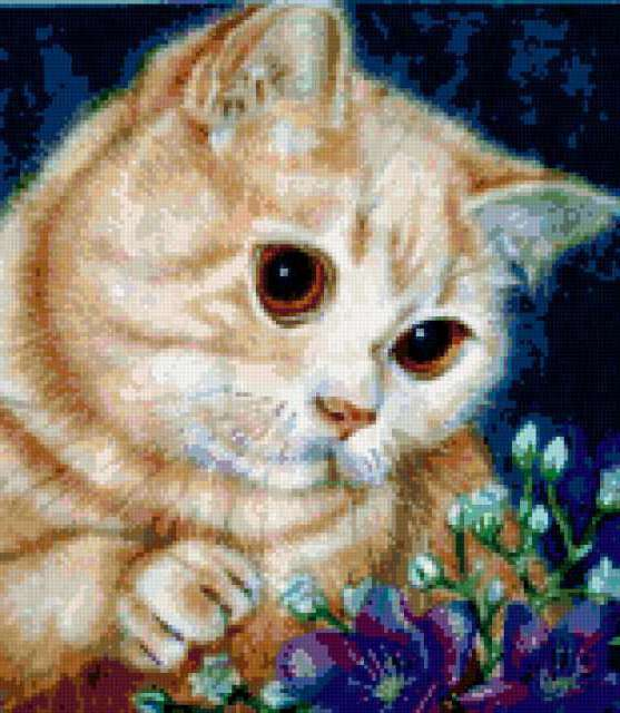 Кот симоша, британец, кремовый