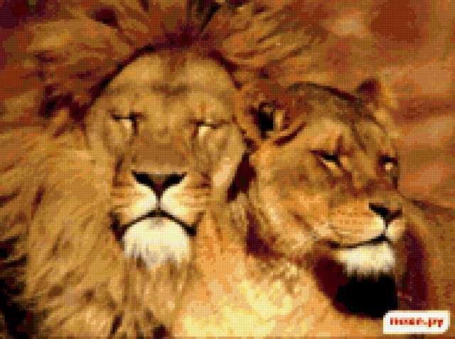 Лев и львица, звери