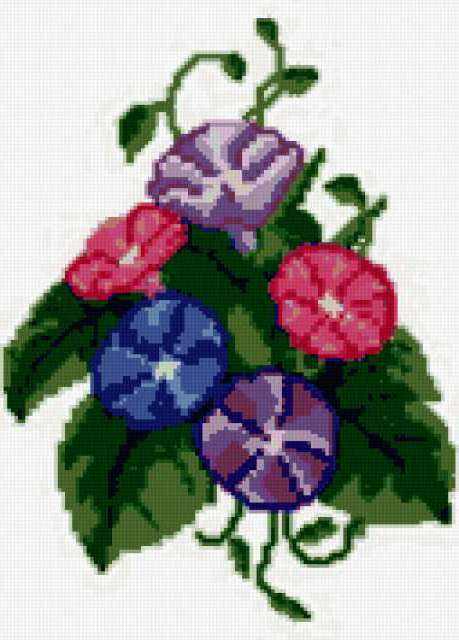 Вьюнок, вьюнок, цветок, цветы,