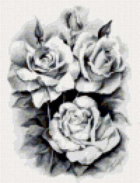 Розы ч/б, предпросмотр