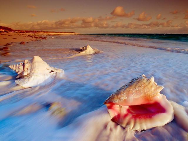 Ракушки, море, ракушки, песок