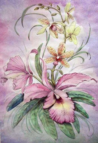 Дикая орхидея, оригинал