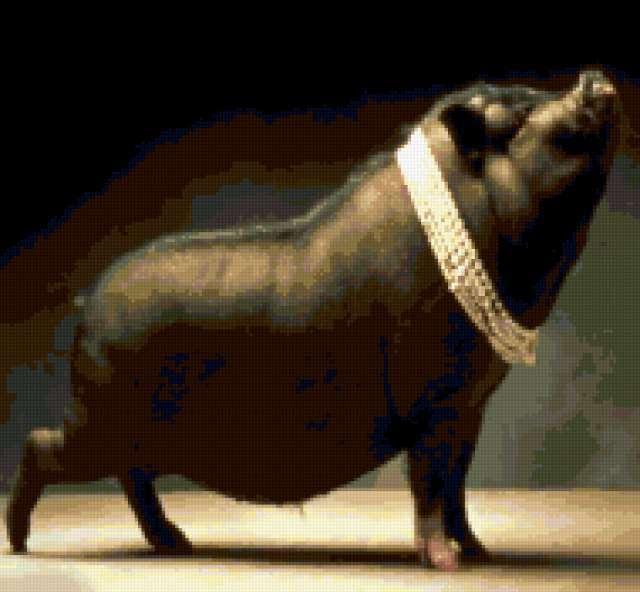 Свинья в жемчугах