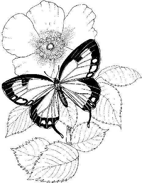 Ч-б бабочки, оригинал