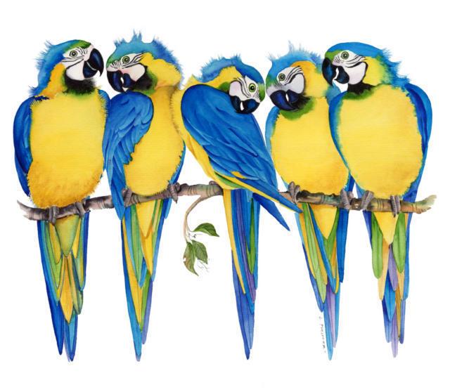 Попугаи, птицы, ветка, попугаи