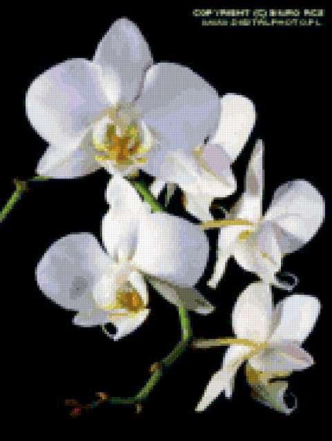 цветы, на черной канве