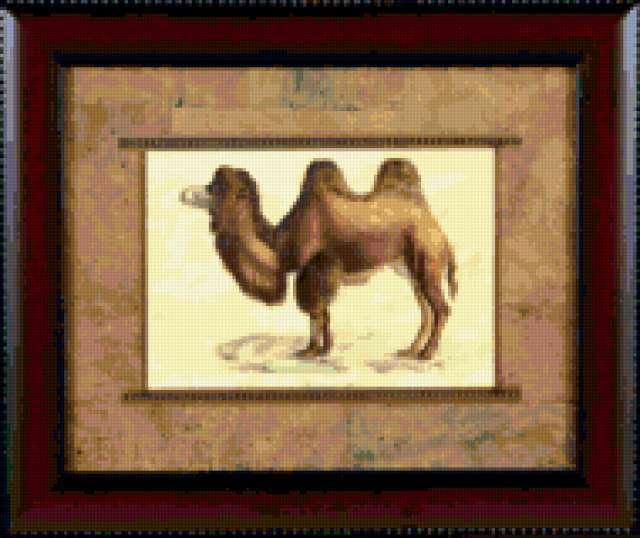 Верблюд, предпросмотр