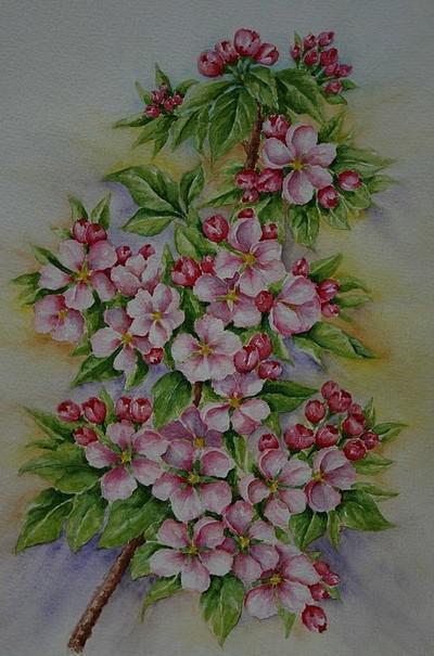 Ветка яблони, оригинал