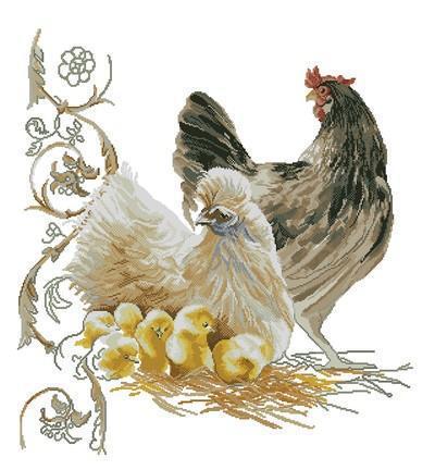 Курицы, курица, цыплята, птицы