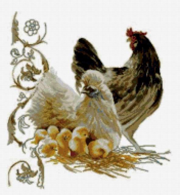 Курицы, предпросмотр