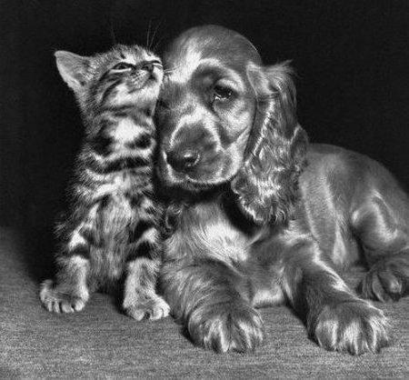 Котёнок и щенок, друзья,