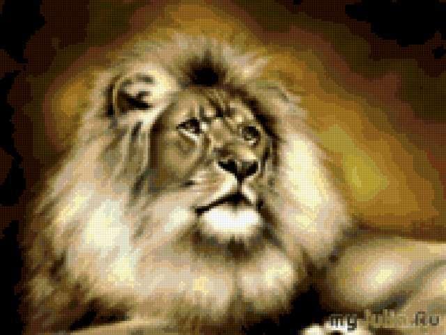 кошки, львы, большие кошки