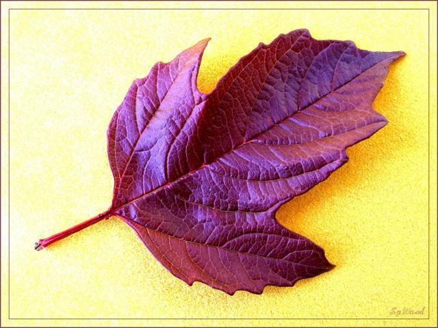 Осенний листок, оригинал