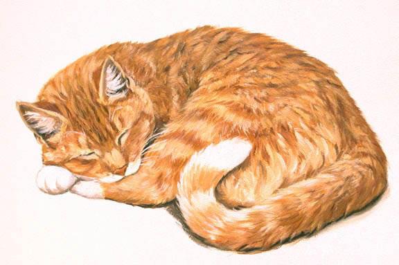 Рыжая кошка,