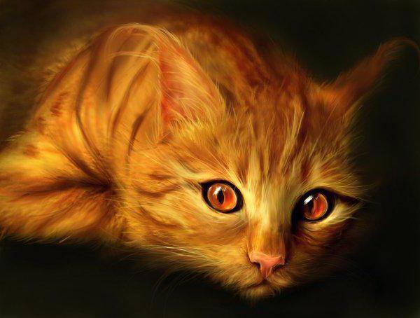 Рыжая кошка, рыжая кошка