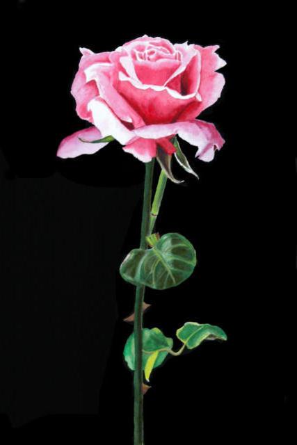 Роза на черной канве, оригинал