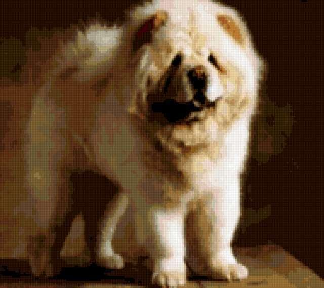 Собака, чау-чау, предпросмотр