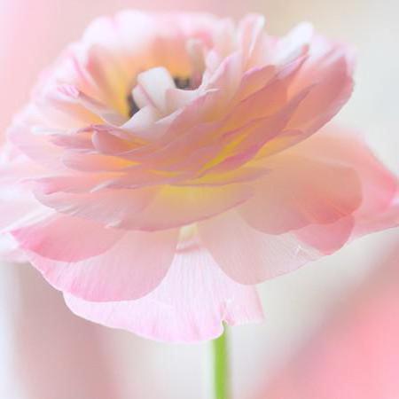 Картинки по запроÑу фото нежные цветы