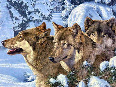 Лесные братья, волки, трое,