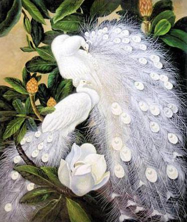 Белые павлины, птицы, павлины,