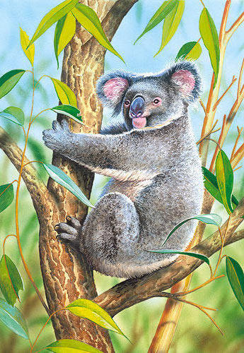 Коала, коала, животные