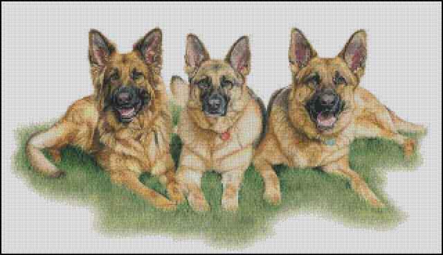 Три овчарки, животные, собаки,