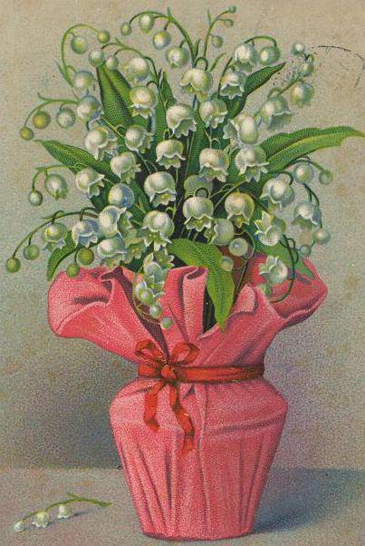 Ландыши, цветы, ландыш