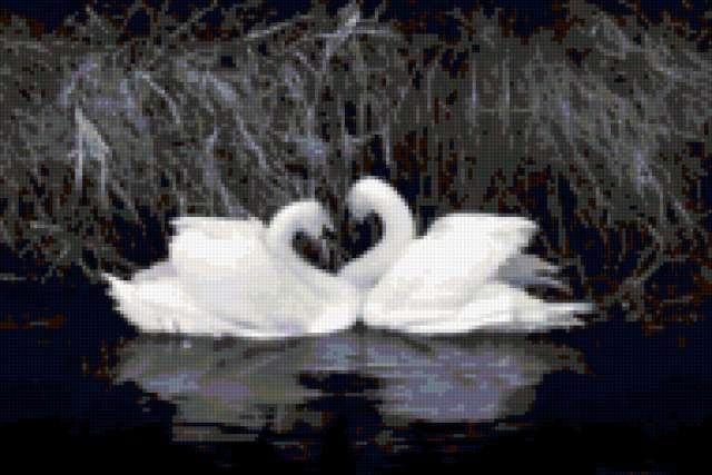 Два лебедя, птицы
