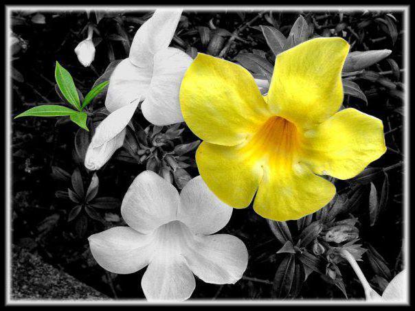 Контрастные цветы, оригинал