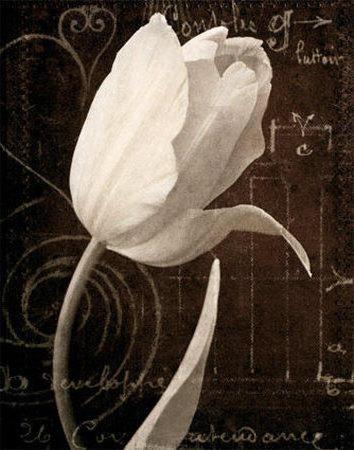 Белый Тюльпан, тюльпаны, цветы