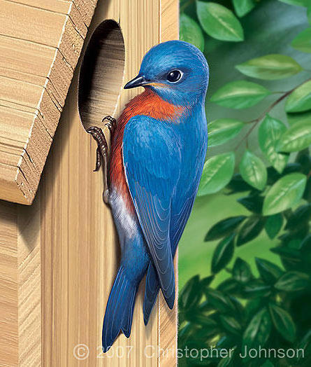 Синяя птица, живопись, птицы,