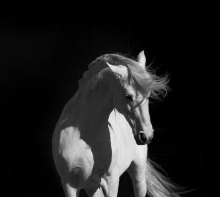 Белый конь, оригинал
