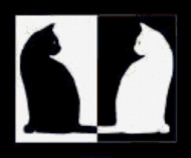 Черно белые кошки,