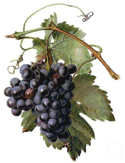 Виноград, фрукты, ягоды
